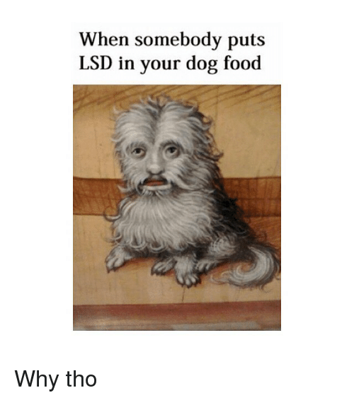 Food, Classical Art, and Dog: When somebody puts  LS  D in your dog food Why tho