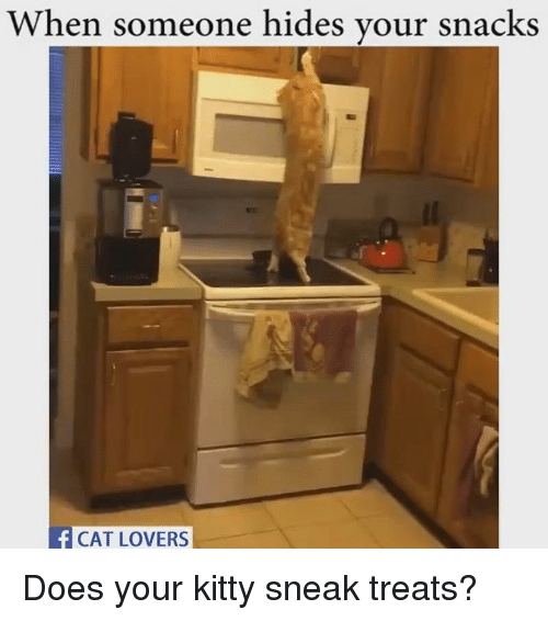 cat lover: When someone hides your snacks  CAT LOVERS Does your kitty sneak treats?