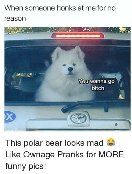 polarized: When someone honks at me for no  reason  You wanna go  bitch This polar bear looks mad 😂  Like Ownage Pranks for MORE funny pics!