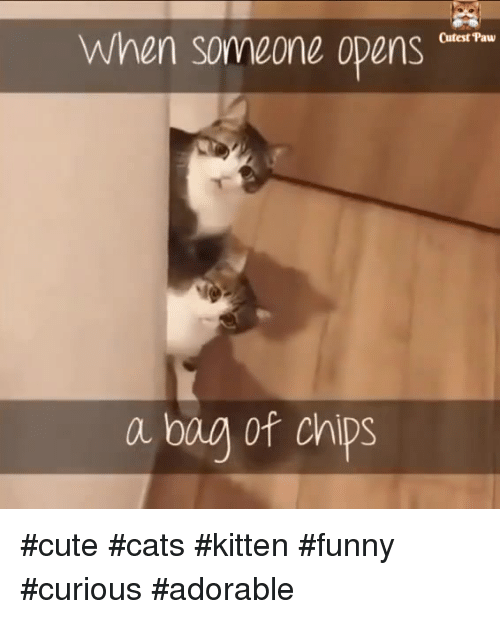 Cats, Cute, and Funny: When someone oDens Cutest Paw a bag of chis