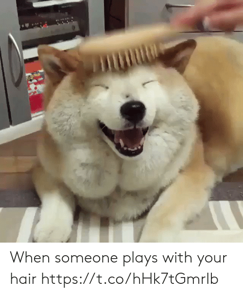 Funny, Hair, and Someone: When someone plays with your hair https://t.co/hHk7tGmrIb