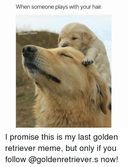 Golden Retriever Meme
