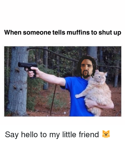 Hello, Memes, and Shut Up: When someone tells muffins to shut up Say hello to my little friend 🐱