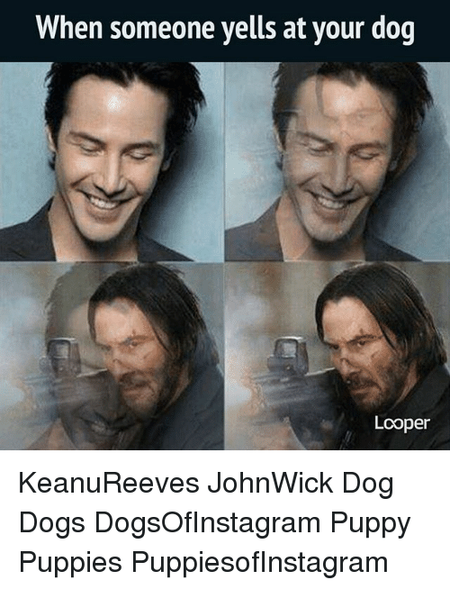 loopers: When someone yells at your dog  Looper KeanuReeves JohnWick Dog Dogs DogsOfInstagram Puppy Puppies PuppiesofInstagram