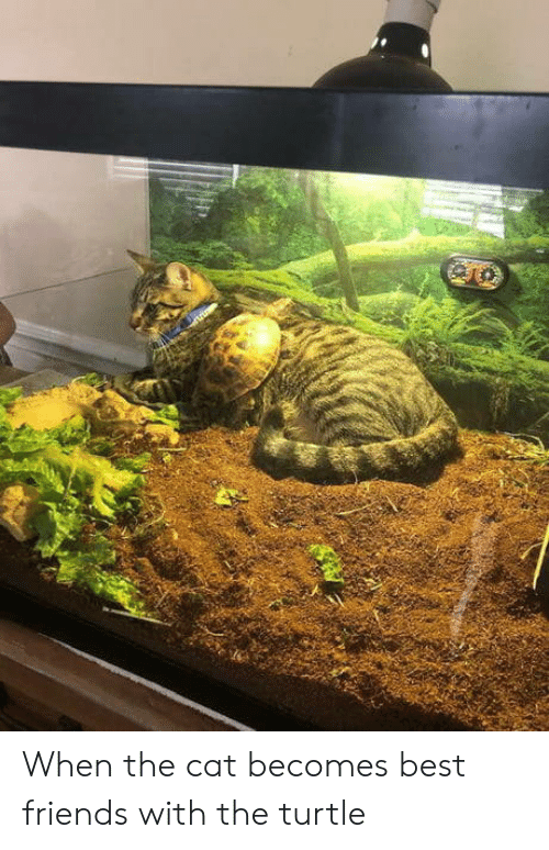 Friends, Best, and Turtle: When the cat becomes best friends with the turtle