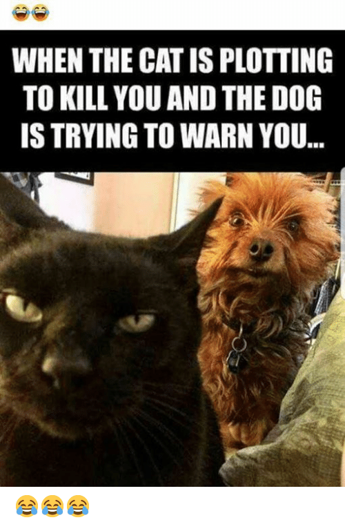 Memes, Yo, and 🤖: WHEN THE CAT IS PLOTTING  TO KILL YOU AND THE DOG  IS TRYING TO WARN YO... 😂😂😂