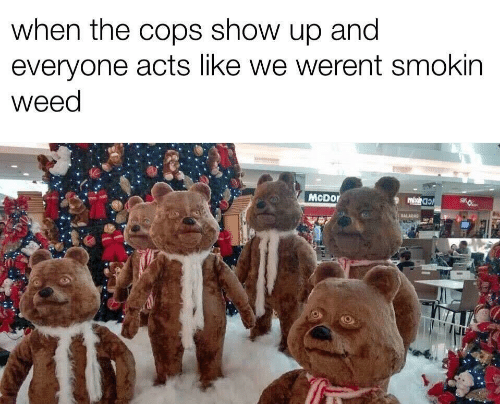 Weed, Cops, and Show: when the cops show up and  everyone acts like we werent smokin  weed  Mcрor  mbc  SALADAS