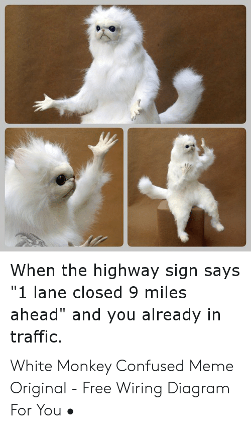 """Confused Meme: When the highway sign says  """"1 lane closed 9 miles  ahead"""" and you already in  traffic. White Monkey Confused Meme Original - Free Wiring Diagram For You •"""