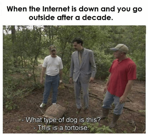 Dog, The Internet, and Down: When the Internet is down and you go  outside after a decade.  What type of dog is this?  This is a tortoise