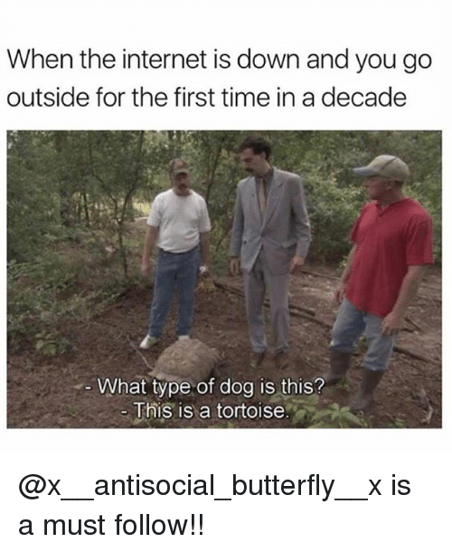 Internet, Memes, and Butterfly: When the internet is down and you go  outside for the first time in a decade  What type of dog is this?  This is a tortoise @x__antisocial_butterfly__x is a must follow!!