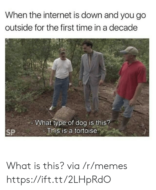 Internet, Memes, and Time: When the internet is down and you go  outside for the first time in a decade  -What type of dog is this?  -This is a tortoise.  SP What is this? via /r/memes https://ift.tt/2LHpRdO