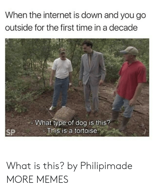 Dank, Internet, and Memes: When the internet is down and you go  outside for the first time in a decade  -What type of dog is this?  -This is a tortoise.  SP What is this? by Philipimade MORE MEMES