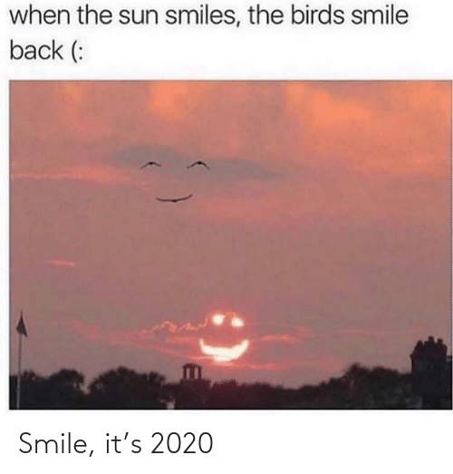 Birds, Smile, and Smiles: when the sun smiles, the birds smile  back (: Smile, it's 2020
