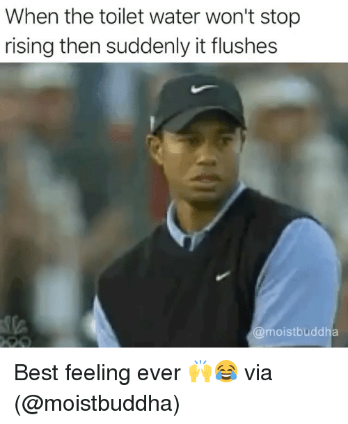 Memes, Best, and Water: When the toilet water won't stop  rising then suddenly it flushes  moistbuddha Best feeling ever 🙌😂 via (@moistbuddha)