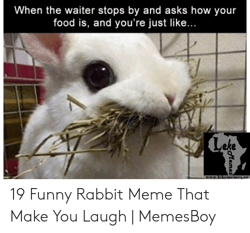 Memesboy: When the waiter stops by and asks how your  food is, and you're just like...  Leke  www.lekemicmesco 19 Funny Rabbit Meme That Make You Laugh | MemesBoy