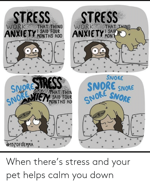 calm: When there's stress and your pet helps calm you down