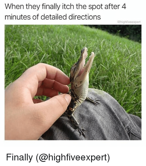Memes, 🤖, and They: When they finally itch the spot after 4  minutes of detailed directions  @highfiveexpert Finally (@highfiveexpert)