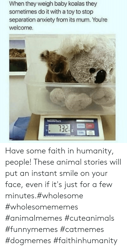 Faith In Humanity: When they weigh baby koalas they  sometimes do it with a toy to stop  separation anxiety from its mum. You're  welcome.  Wedserbun  732 Have some faith in humanity, people! These animal stories will put an instant smile on your face, even if it's just for a few minutes.#wholesome #wholesomememes #animalmemes #cuteanimals #funnymemes #catmemes #dogmemes #faithinhumanity