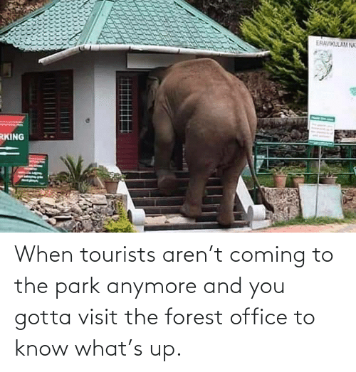 forest: When tourists aren't coming to the park anymore and you gotta visit the forest office to know what's up.