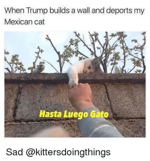 mexican cat: When Trump builds a wall and deports my  Mexican cat  Hasta Luego Gato Sad @kittersdoingthings