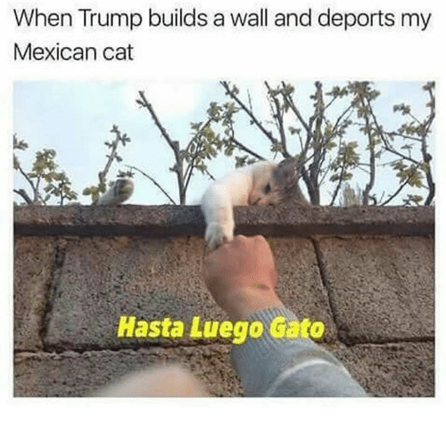 mexican cat: When Trump builds a wall and deports my  Mexican cat  Hasta Luego Gato