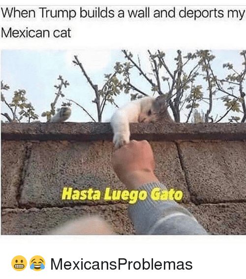 Cato: When Trump builds a wall and deports my  Mexican cat  Hasta Luego cato 😬😂 MexicansProblemas