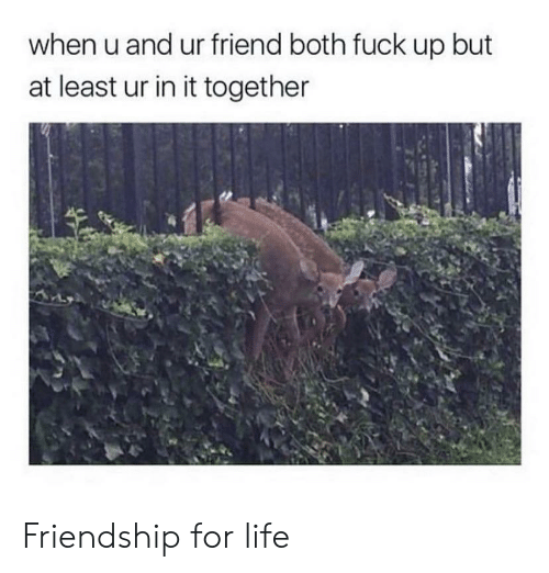 Life, Fuck, and Friendship: when u and ur friend both fuck up but  at least ur in it together Friendship for life
