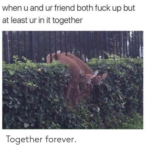 Dank, Forever, and Fuck: when u and ur friend both fuck up but  at least ur in it together Together forever.