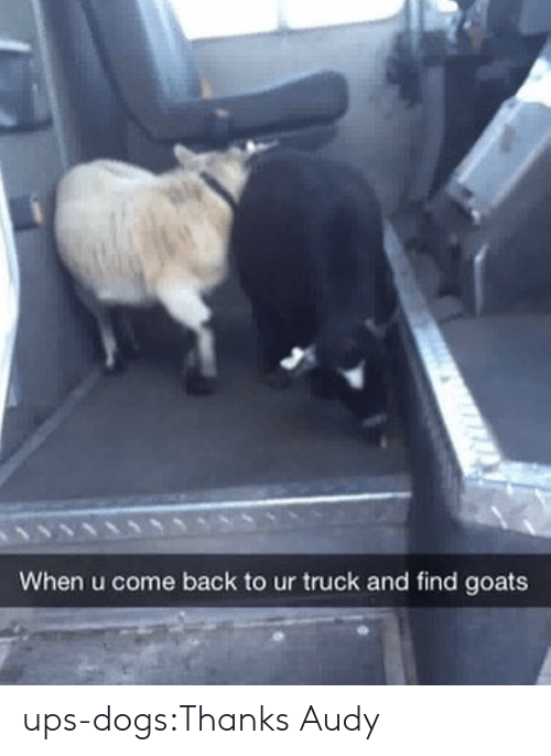 Dogs, Target, and Tumblr: When u come back to ur truck and find goats ups-dogs:Thanks Audy