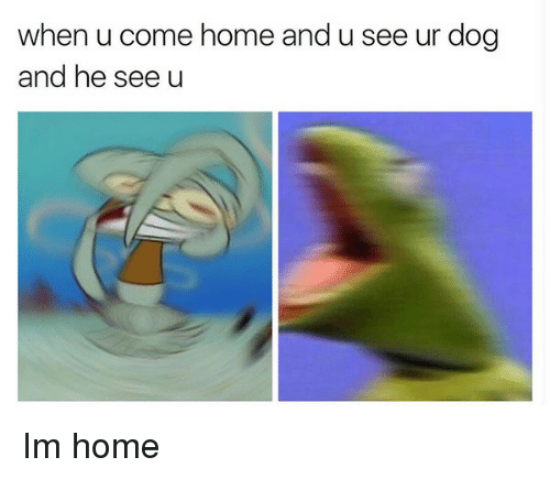 Home, Dog, and When U: when u come home and u see ur dog  and he see u Im home