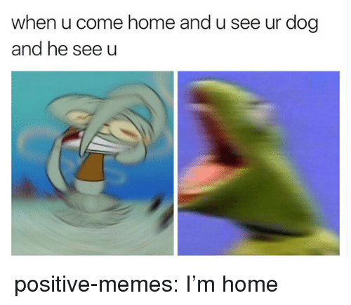 Memes, Tumblr, and Blog: when u come home and u see ur dog  and he see u positive-memes:  I'm home