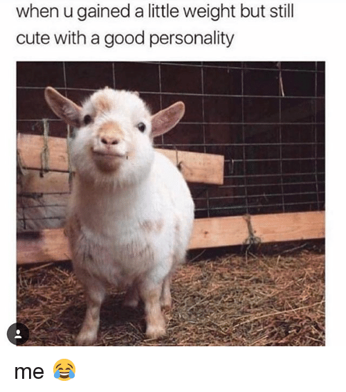 Cute, Memes, and Good: when u gained a little weight but still  cute with a good personality me 😂