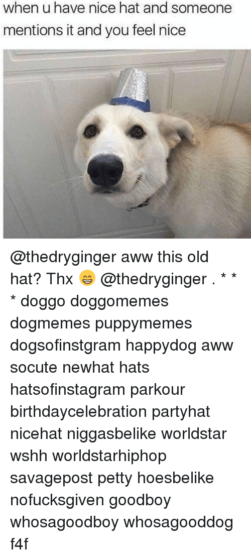 Goodboy: when u have nice hat and someone  mentions it and you feel nice @thedryginger aww this old hat? Thx 😁 @thedryginger . * * * doggo doggomemes dogmemes puppymemes dogsofinstgram happydog aww socute newhat hats hatsofinstagram parkour birthdaycelebration partyhat nicehat niggasbelike worldstar wshh worldstarhiphop savagepost petty hoesbelike nofucksgiven goodboy whosagoodboy whosagooddog f4f
