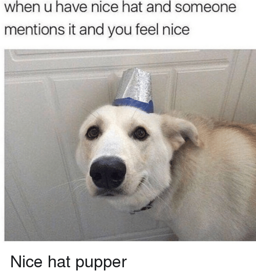 Nice, You, and Hat: when u have nice hat and someone  mentions it and you feel nice Nice hat pupper