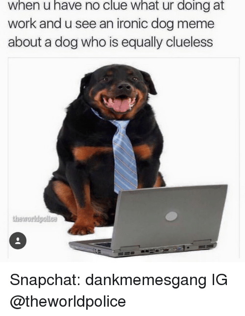 Memes, 🤖, and Dog: When u have no clue What ur doing at  work and u see an ironic dog meme  about a dog who is equally clueless Snapchat: dankmemesgang  IG @theworldpolice