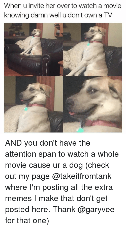 Funny, Movies, and Movie: When u invite her over to watch a movie  knowing damn well u don't own a TV AND you don't have the attention span to watch a whole movie cause ur a dog (check out my page @takeitfromtank where I'm posting all the extra memes I make that don't get posted here. Thank @garyvee for that one)