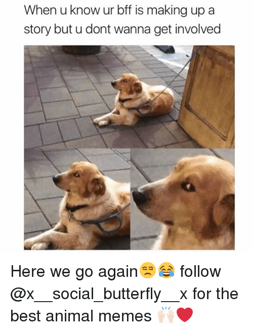 Funny, Memes, and Animal: When u know ur bff is making up a  story but u dont wanna get involved Here we go again😒😂 follow @x__social_butterfly__x for the best animal memes 🙌🏻❤️