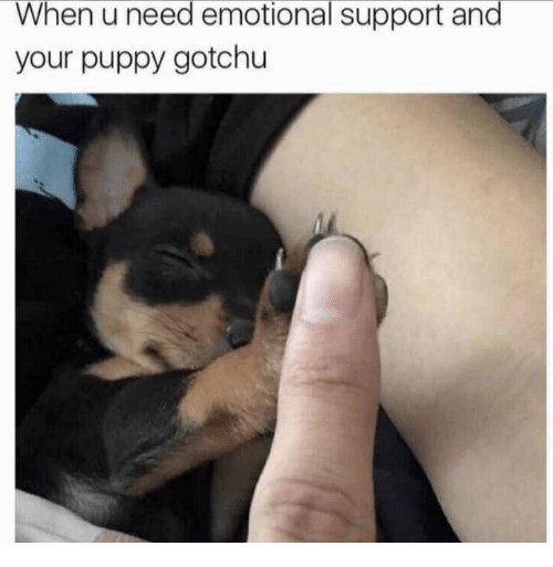 Gotchu: When u need emotional support and  your puppy gotchu