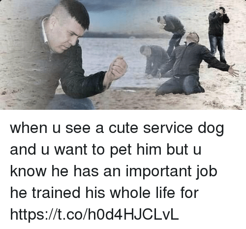 Cute, Life, and Girl Memes: when u see a cute service dog and u want to pet him but u know he has an important job he trained his whole life for https://t.co/h0d4HJCLvL