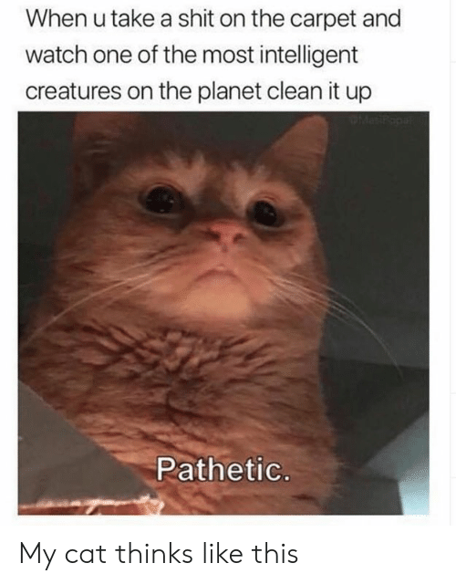 Dank, Shit, and Watch: When u take a shit on the carpet and  watch one of the most intelligent  creatures on the planet clean it up  PMesP  Pathetic. My cat thinks like this