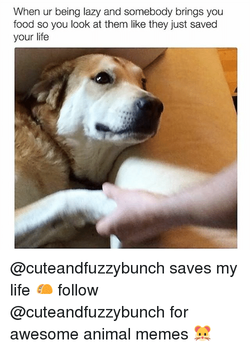 Food, Lazy, and Life: When ur being lazy and somebody brings you  food so you look at them like they just saved  your life @cuteandfuzzybunch saves my life 🌮 follow @cuteandfuzzybunch for awesome animal memes 🐹