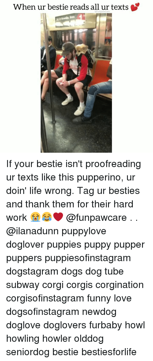 howling: When ur bestie reads all ur texts If your bestie isn't proofreading ur texts like this pupperino, ur doin' life wrong. Tag ur besties and thank them for their hard work 😭😂❤️ @funpawcare . . @ilanadunn puppylove doglover puppies puppy pupper puppers puppiesofinstagram dogstagram dogs dog tube subway corgi corgis corgination corgisofinstagram funny love dogsofinstagram newdog doglove doglovers furbaby howl howling howler olddog seniordog bestie bestiesforlife
