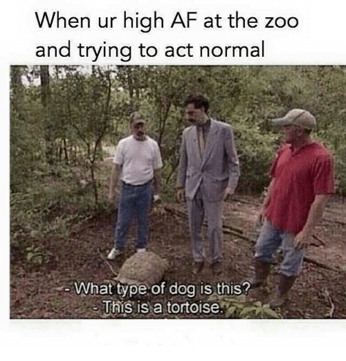 Memes, High AF, and 🤖: When ur high AF at the zoo  and trying to act normal  What type of dog is this?  This is a tortoise