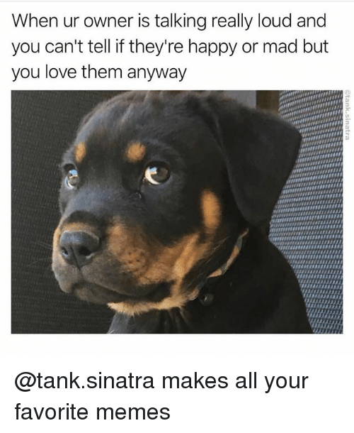 Louding: When ur owner is talking really loud and  you can't tell if they're happy or mad but  you love them anyway @tank.sinatra makes all your favorite memes