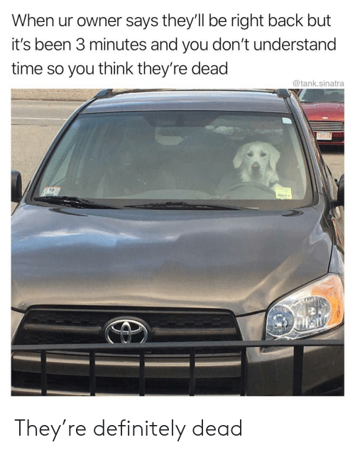 Definitely, Funny, and Time: When ur owner says they'll be right back but  it's been 3 minutes and you don't understand  time so you think they're dead  @tank.sinatra  10 They're definitely dead