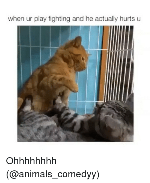 Animals, Funny, and Play: when ur play fighting and he actually hurts u Ohhhhhhhh (@animals_comedyy)