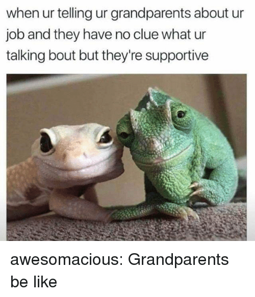 Be Like, Tumblr, and Blog: when ur telling ur grandparents about ur  job and they have no clue what ur  talking bout but they're supportive awesomacious:  Grandparents be like