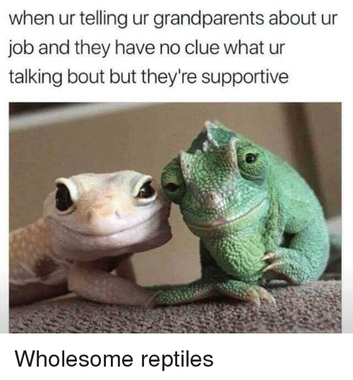Wholesome, Job, and Clue: when ur telling ur grandparents about ur  job and they have no clue what ur  talking bout but they're supportive Wholesome reptiles