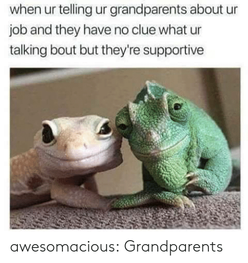 Tumblr, Blog, and Http: when ur telling ur grandparents about ur  job and they have no clue what ur  talking bout but they're supportive awesomacious:  Grandparents