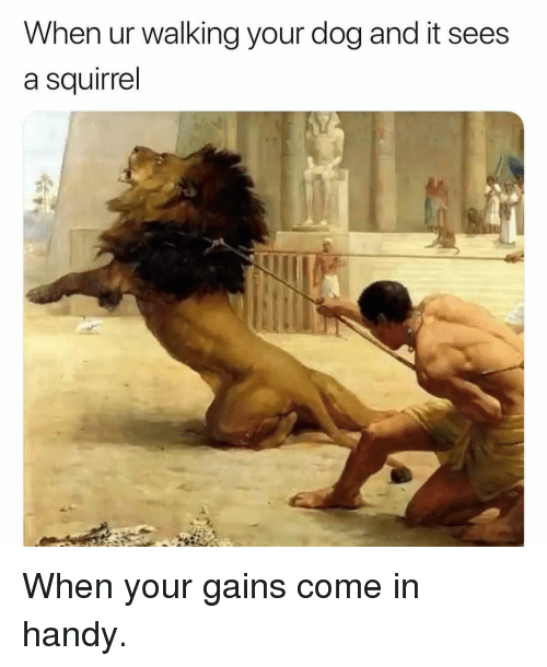 Gym, Squirrel, and Dog: When ur walking your dog and it sees  a squirrel When your gains come in handy.